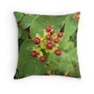 Berries cushion