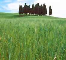 Italian Field by Haggiswonderdog