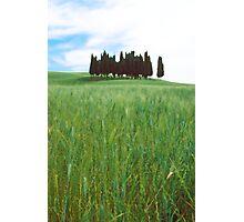 Italian Field Photographic Print