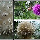 Thistle Surprise by Donna Keevers Driver