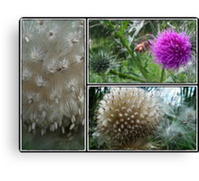 Thistle Surprise Canvas Print