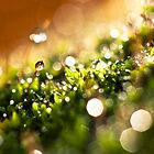 Bokeh of moss by Jérôme Le Dorze