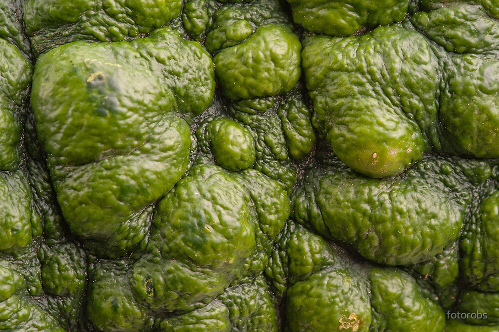 Background of green pumpkin. by fotorobs