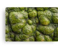 Background of green pumpkin. Canvas Print
