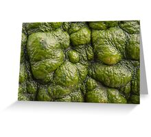 Background of green pumpkin. Greeting Card