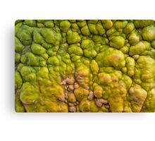 Background of colourful pumpkin. Canvas Print