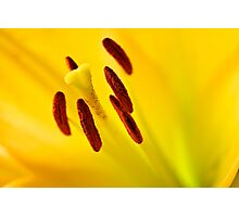 Lily Close Up Photographic Print