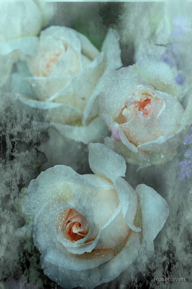 """""""French Lace..."""" by Rosehaven"""