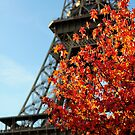 Les couleurs dell'  automne by Peppedam