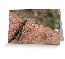 tiny lizard Greeting Card