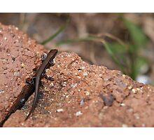tiny lizard Photographic Print