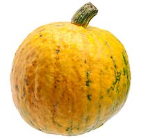 Yellow pumpkin isolated on white background. by fotorobs