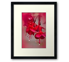 All Red Framed Print