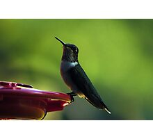 Female Ruby-Throated Hummingbird Photographic Print
