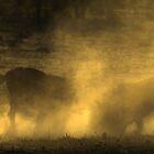 Sparring Wildebeest by Rashid Latiff
