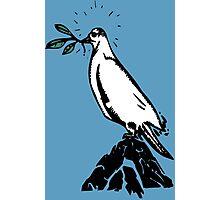 peace dove  Photographic Print