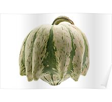 Colourful pumpkin isolated on white background. Poster