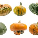 Colourful pumpkins isolated on white background. by fotorobs