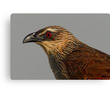 White Browed Coucal Canvas Print