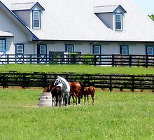 Kentucky Horses by Gina Collins