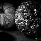 Pumpkins by plgphotx