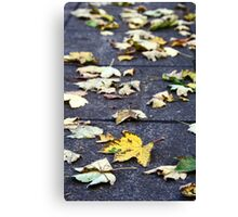Yellow leaf, London 2010 Canvas Print