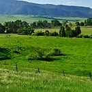 The Green Valley by Terry Everson
