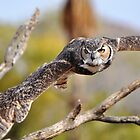 Great Horned Owl in Flight by levipie