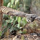 Great Horned Owl in Flight 2 by levipie