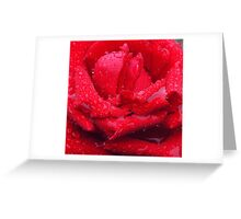 A Rose Greeting Card