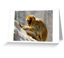 Barbary Ape Greeting Card