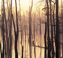 Cypress Swamp by James Richardson
