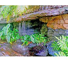 botanic garden HDR Photographic Print