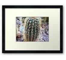 botanic garden cactus Framed Print