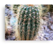 botanic garden cactus Canvas Print