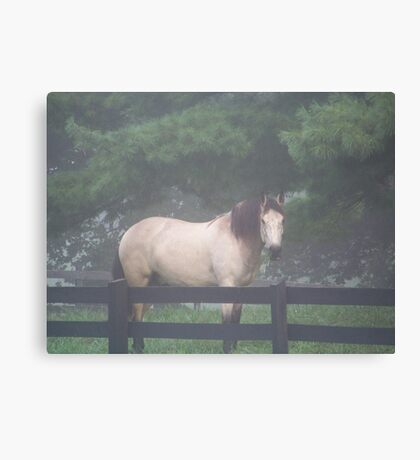 Grazing In The Fog Canvas Print