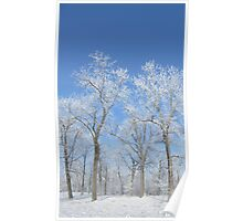 Icy Trees in the Park Poster