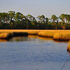 Salt Marsh by joevoz