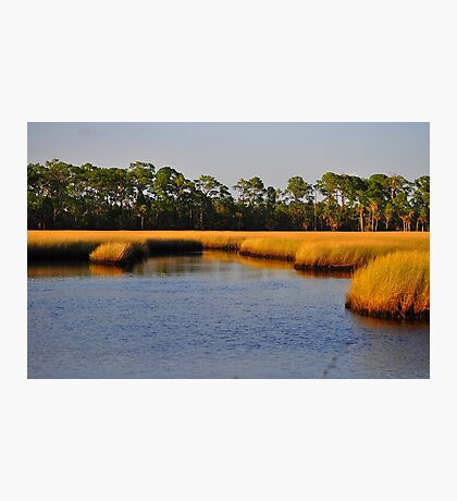 Salt Marsh Photographic Print