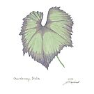 Chardonay Leaf by Judy Newcomb