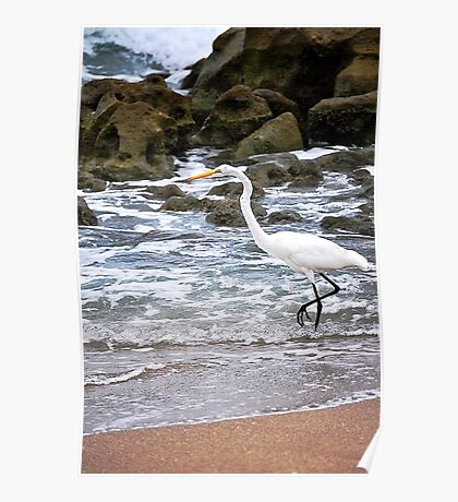 Egret on the Rocky Beach Poster