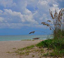 Tranquil Beach by joevoz