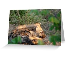 Baby hyena in the afternoon sun.... Greeting Card