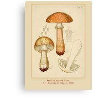Cool Vintage Botanical Mushroom Art by Giacomo Bresadola Canvas Print