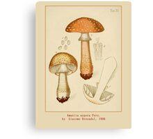 Cool Vintage Botanical Mushroom Art by Giacomo Bresadola Canvas Print