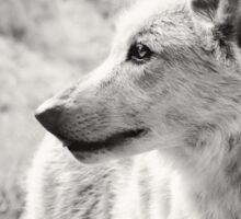 Black and White Wolf Sticker