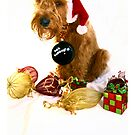 Bah Humbug! by Trish  Anderson