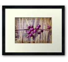Purple berries Framed Print