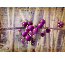 Purple berries Photographic Print