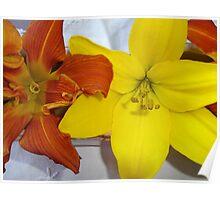 Yellow Lilium and Burnt Orange Daylily. Poster